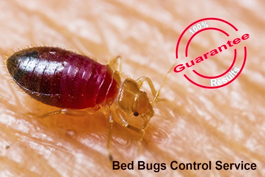 bed_bugs_control_in_chennai