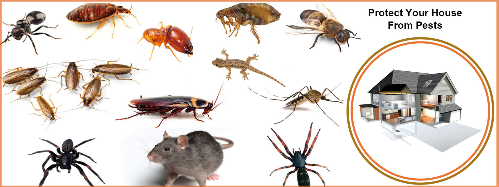 pest control products in chennai
